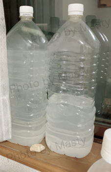 お米 とぎ汁 乳酸菌.png